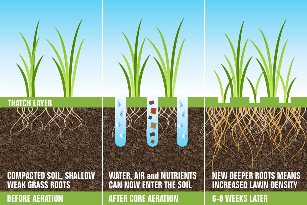 Aeration and Seeding 2