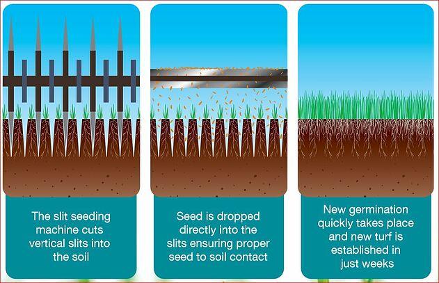 Slit Seeding 2